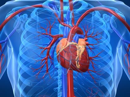 hjärta i bröstkorg