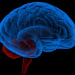 hjärna i blått