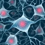neuroner i hjärnan