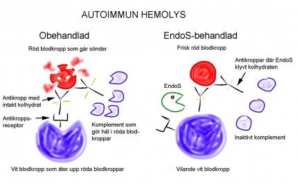 Autoimmun hemolys