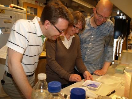 Martin L Olsson, Maria Allhorn och Mattias Collin studerar resultat på labbet