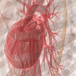 illustration av ett hjärta