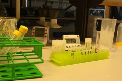 Provrör på laboratorium