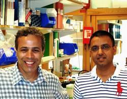 Albert Salehi och Rajesh Kumar