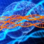 Bild av hjärna och DNA-molekyl