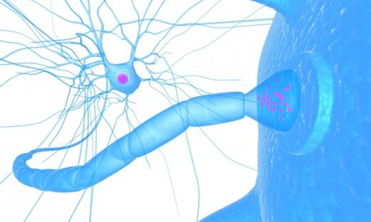 Nervcell och receptor