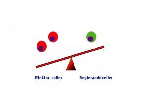 Balans mellan effektorceller och reglerande celler
