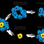 cancerstamceller