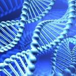 DNAspiral