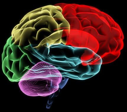 mänsklig hjärna, bild i flera färger