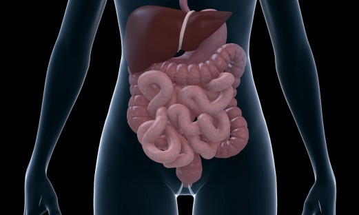 illustration av tarmar