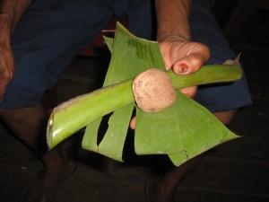 En kreolsk medicinkvinnas behandling av ormbett: bananstam och bissi, en slags nöt.