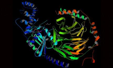 proteinstruktur