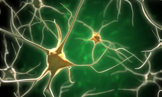 nätverk av neuroner, nervceller