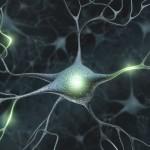 Ny genteknik gör om hudceller till hjärnceller