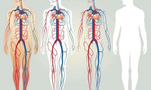 blodcirkulation