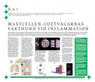Mastcellen - luftvägarnas vakthund vid inflammation