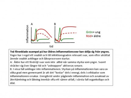 Figur som illustrerar skillnaden i infektionsförlopp hos yngre respektive äldre personer