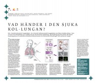 Vad händer i den sjuka KOL-lungan?