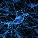 illustration av nervceller