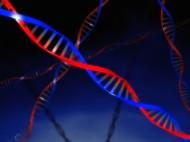 DNA-spiral