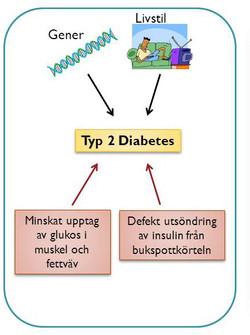 Diabetes och livsstil