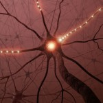 Från stamcell till hjärncell - ny teknik imiterar hjärnan