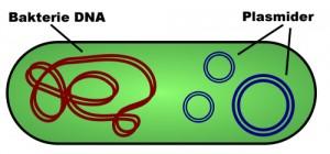 plasmid