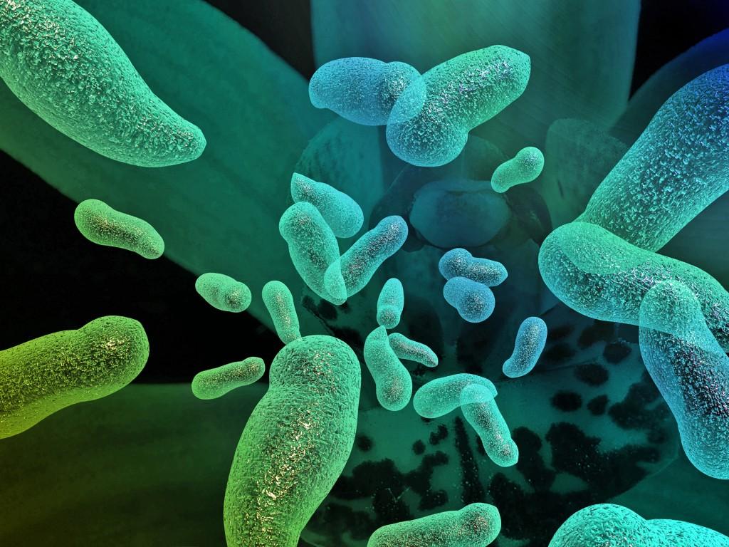 Mikroskopbild av bakterier
