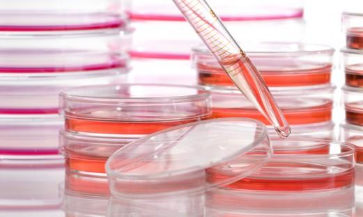 celler i odlingsskålar