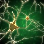 Nätverk av nervceller i hjärnan