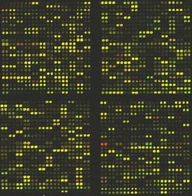 mikroarray