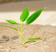 ett träd växer upp ur asfalten