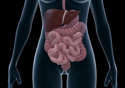magen och tarmarna