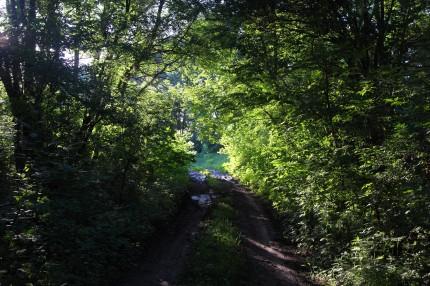bild på naturmiljö