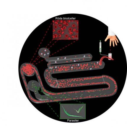 provtagningschip för parasiter