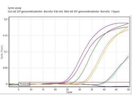 Borrelia-PCR