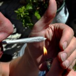 Frågor och svar om cannabis