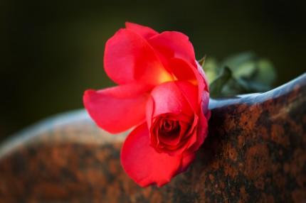 Kärleken - livet - döden