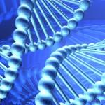 Extra kromosomer bakom viss barnleukemi