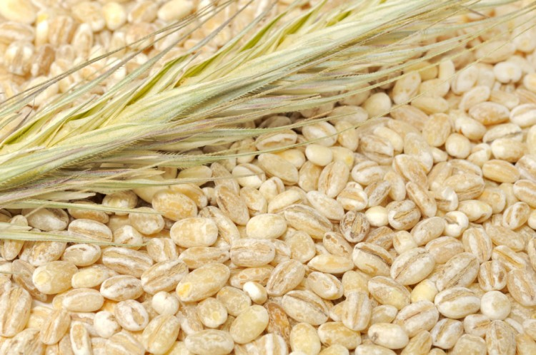 Pearl Barley with Ear