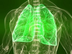 3d rendered illustration of a transparent torso with healthy lung_dreamstime_12989347