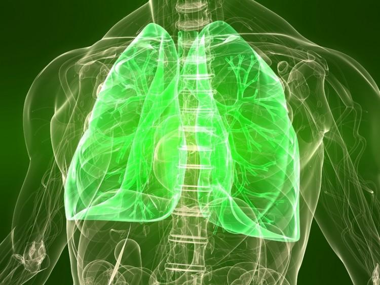 illustratiodär lungorna ses i en genomskinlig kropp. Hela bilden är i grönt.n av lungor