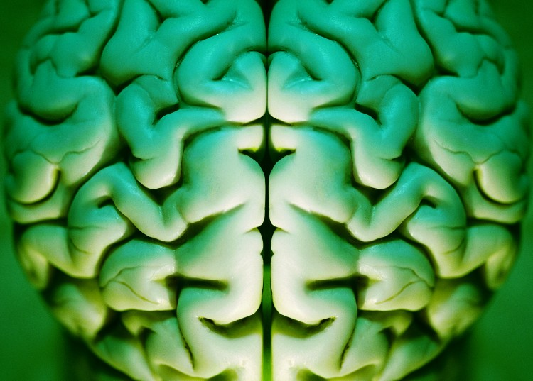 Human brain abstract, alpha, anatomy, art, brain,