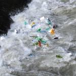 Nanopartiklar av plast stör fiskars beteende