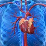 Nya rön om matchning mellan donator och mottagare av hjärtan