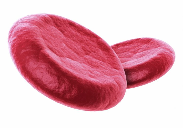 3d render Red Blood Cells close-up (isolated on white and clipping path)