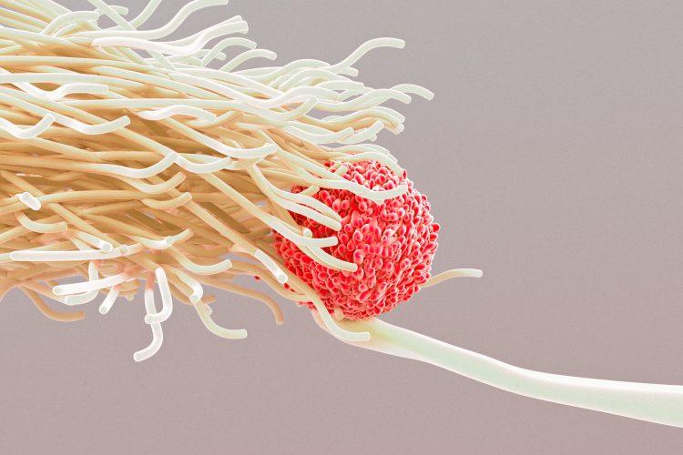 för starkt immunförsvar