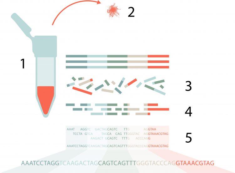 Bilden är en illustration av hur NGS-tekniken fungerar. Den är ett komplement till bildtexten som förklarar steg för steg, 1 till 5, hur en sekvensering går till