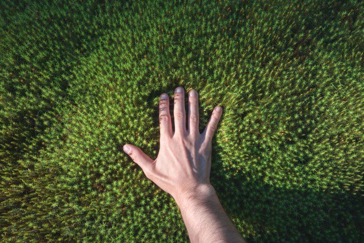 bilden visar en hand uppifrån som personen har lagt på en mjuk matta av grön mossa